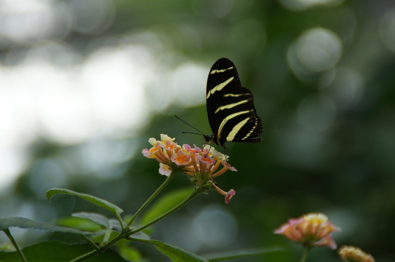 gelb-schwarz, aber keine Biene