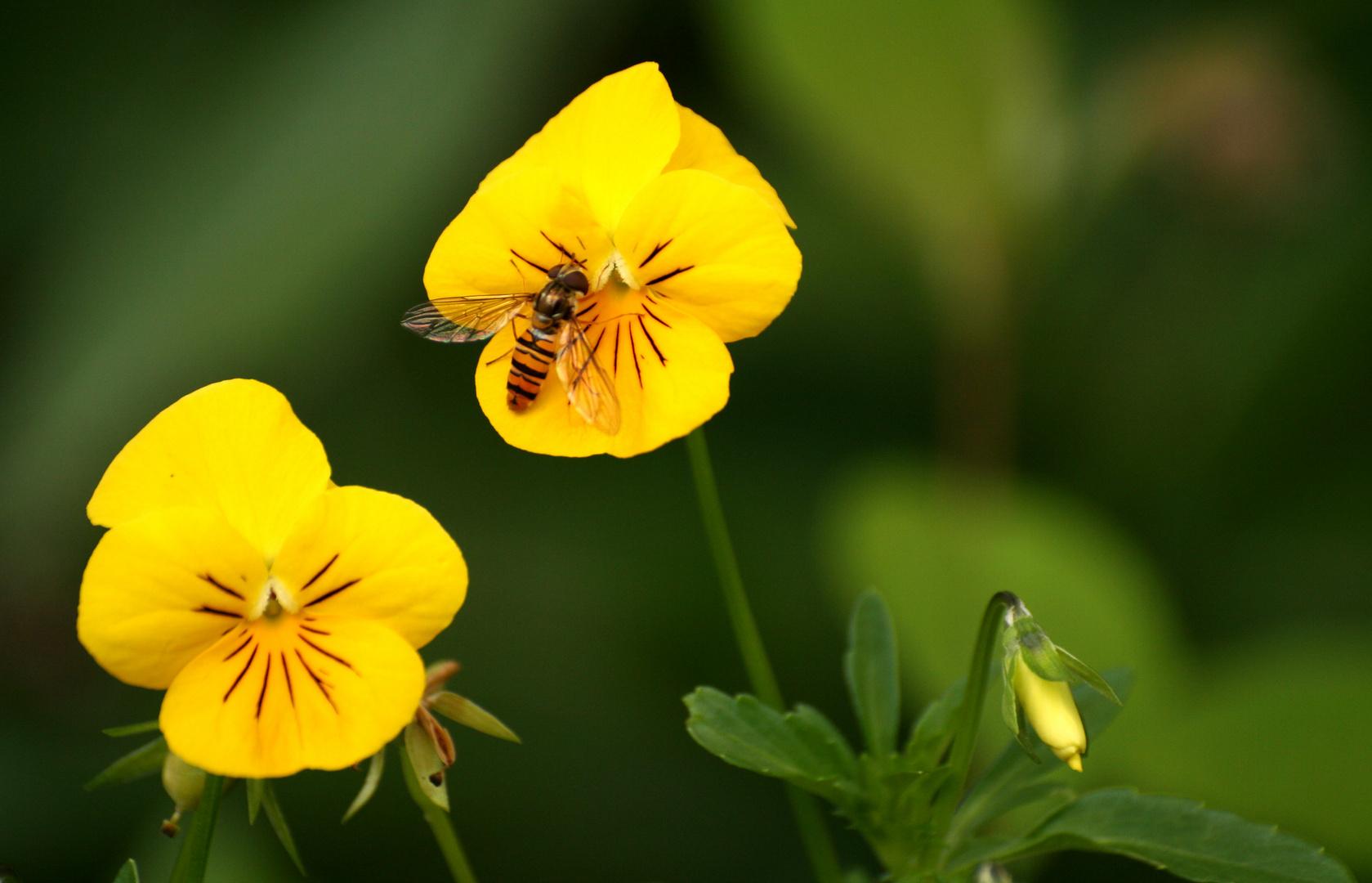Gelb-schwarz gestreift