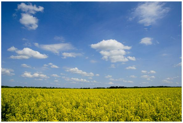 Gelb und Blau im April