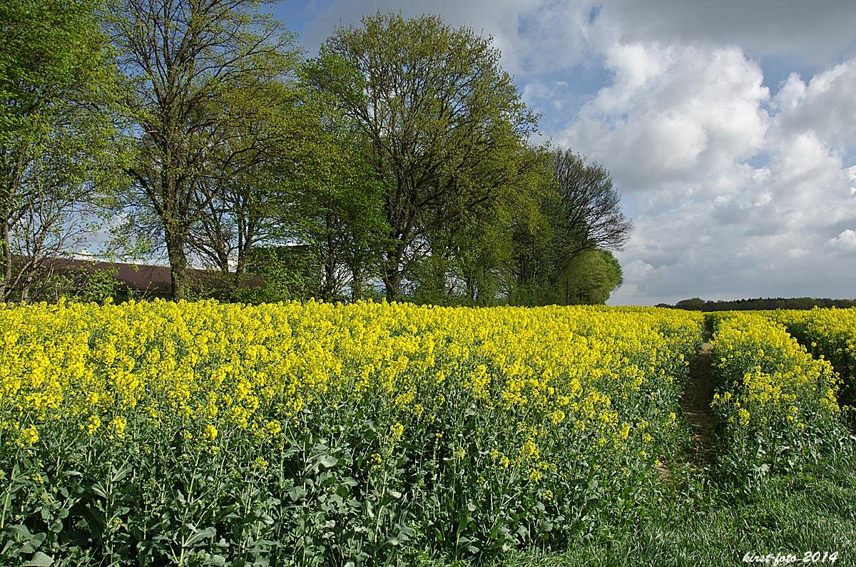 Gelb und Grün