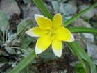 gelb und weiß