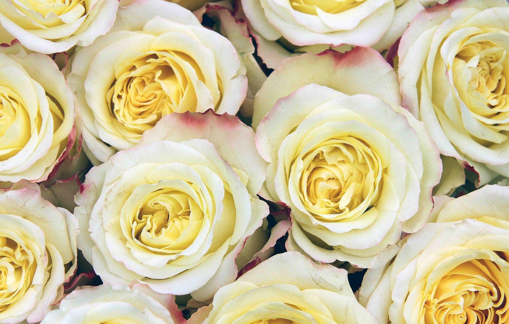 Gelb-weißer Rosenstrauß