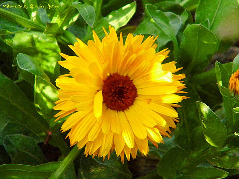 Gelb wie Sonne im Licht & Schattenspiel