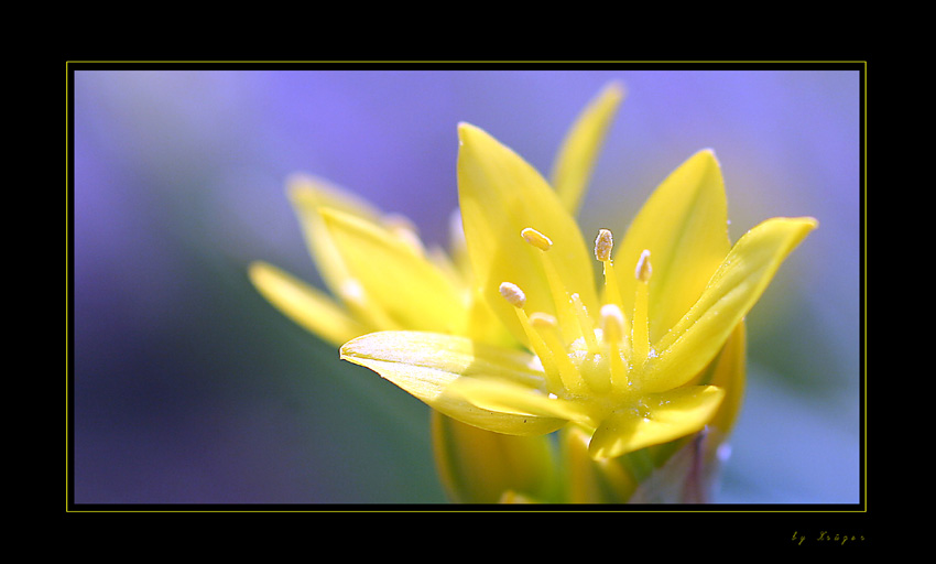 Gelb&Blau.....
