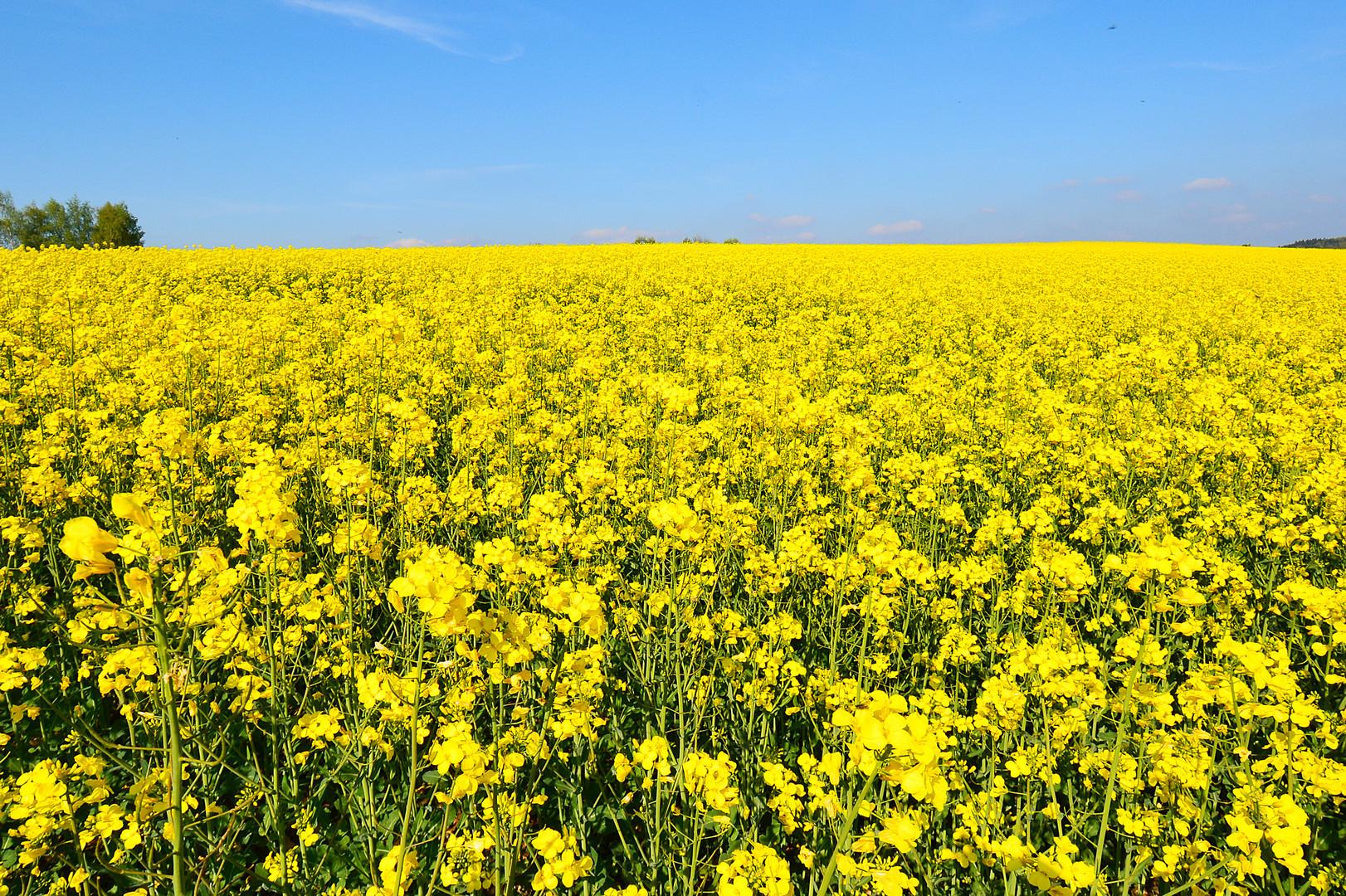 gelbe Aussicht