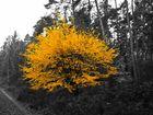 Gelbe Blätter auf einem SW Bild