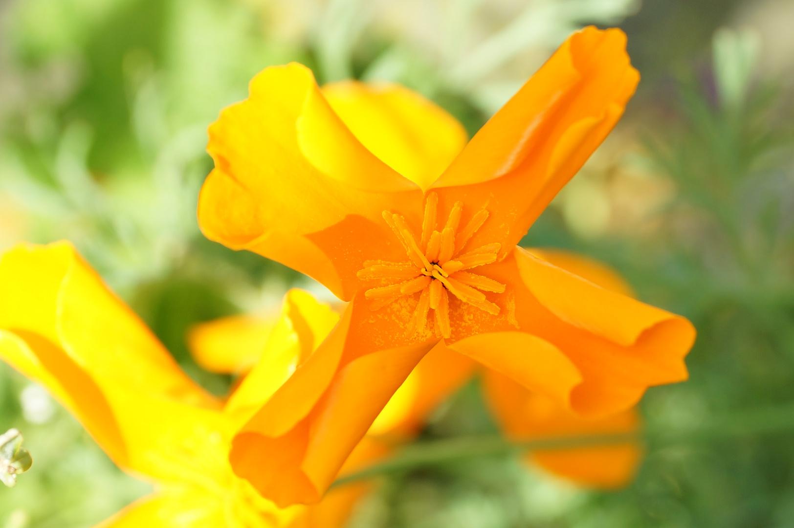 Gelbe Blüte 2