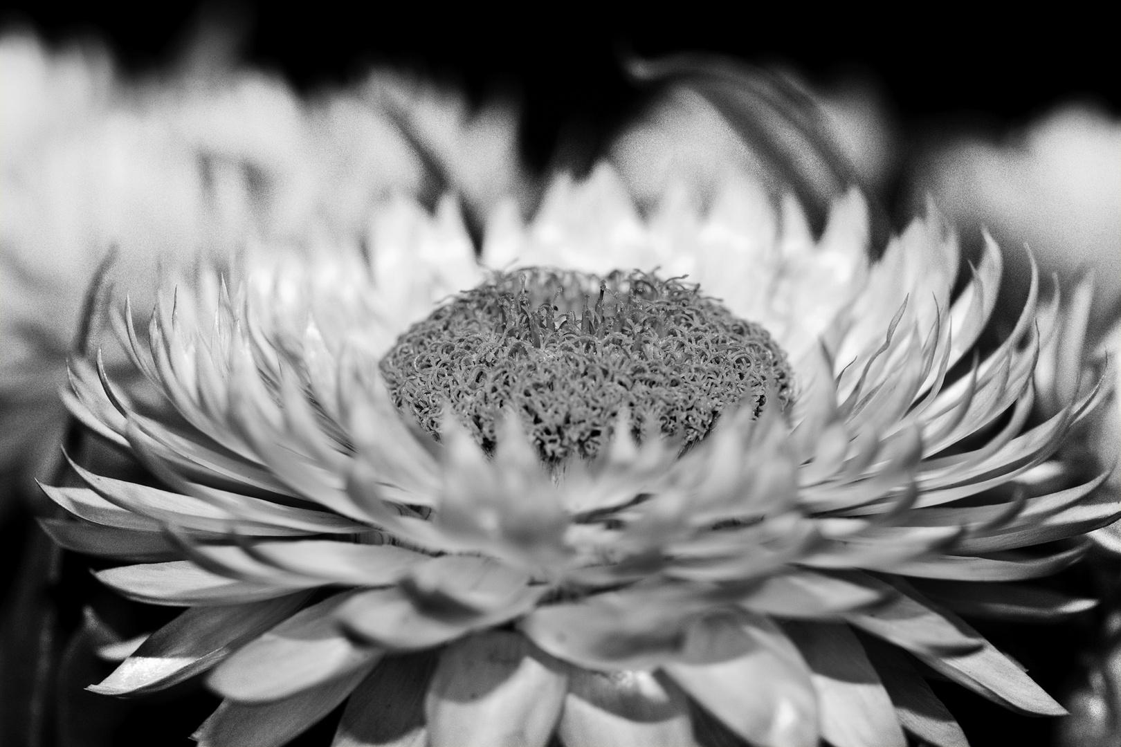 Gelbe Blume mal ganz anders