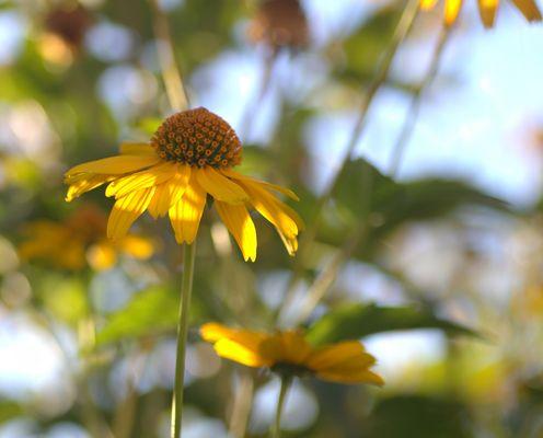 Gelbe Blume mit malerischn Hintergrund