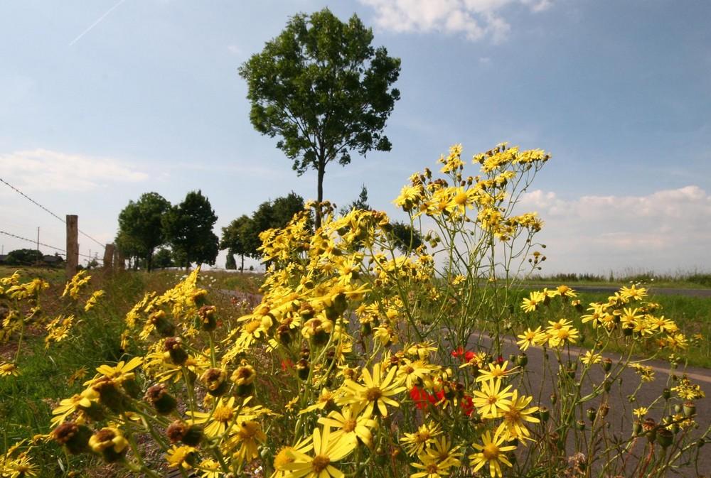 gelbe blumen am wegesrand foto bild landschaft cker. Black Bedroom Furniture Sets. Home Design Ideas