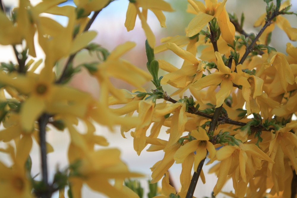 gelbe blumen im fr hling foto bild pflanzen pilze. Black Bedroom Furniture Sets. Home Design Ideas