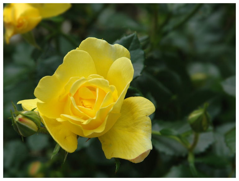 Gelbe Inspiration