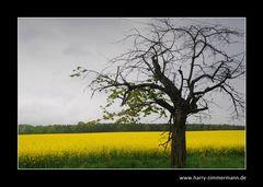 Gelbe Jahreszeit