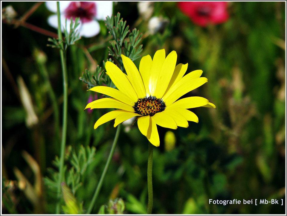 Gelbe kleine Blume