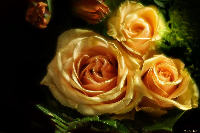 Gelbe Rosen.