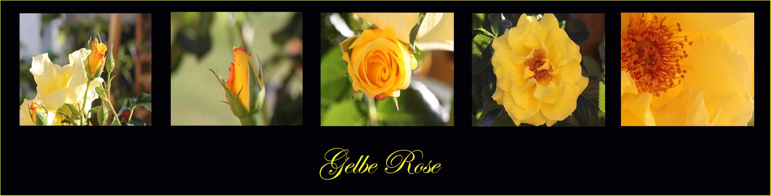Gelbe Rosen - Collage 2