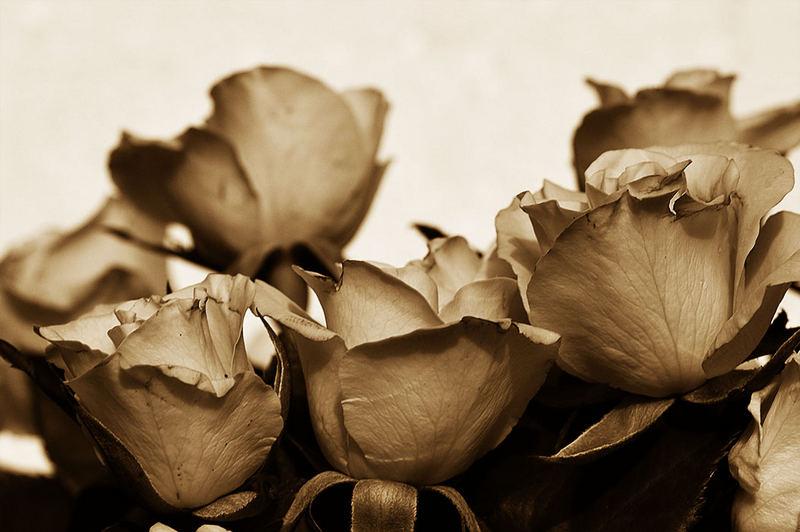 Gelbe Rosen sollen`s sein