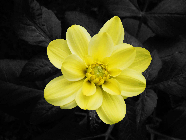 Gelbe Schönheit...