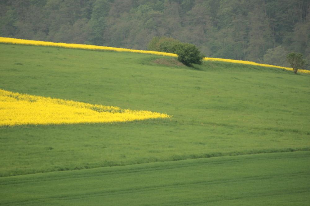 Gelbe Spitze