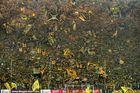 Gelbe Wand