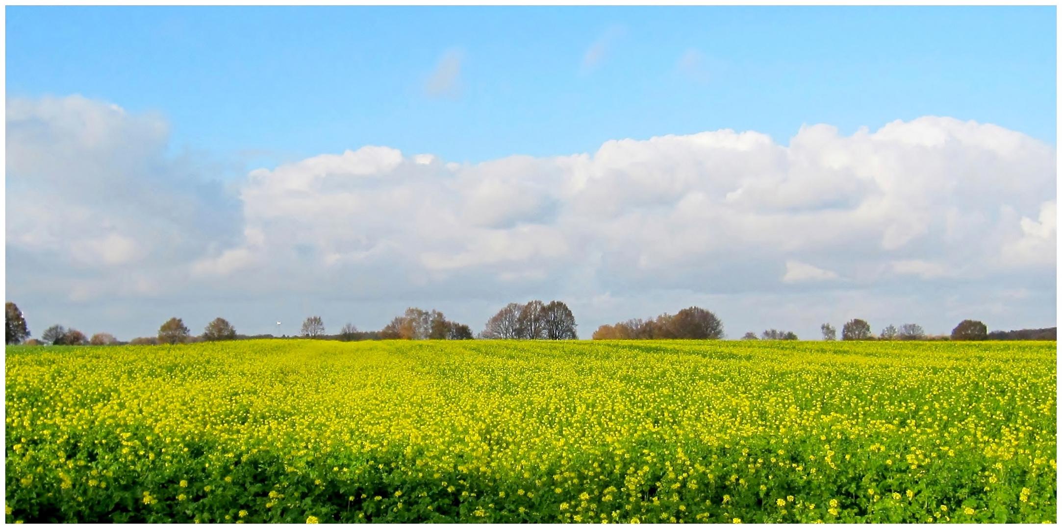 Gelbe Weite