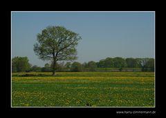 Gelbe Wiesen
