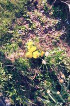 Gelben Tupen