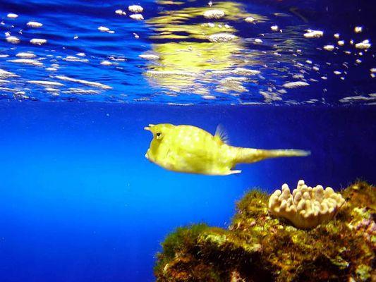 gelber Fisch in blauem Wasser