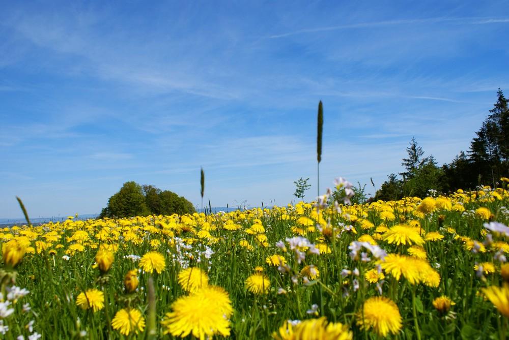 """Gelber Frühling"""