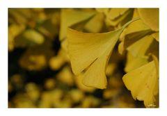 Gelber Herbst....