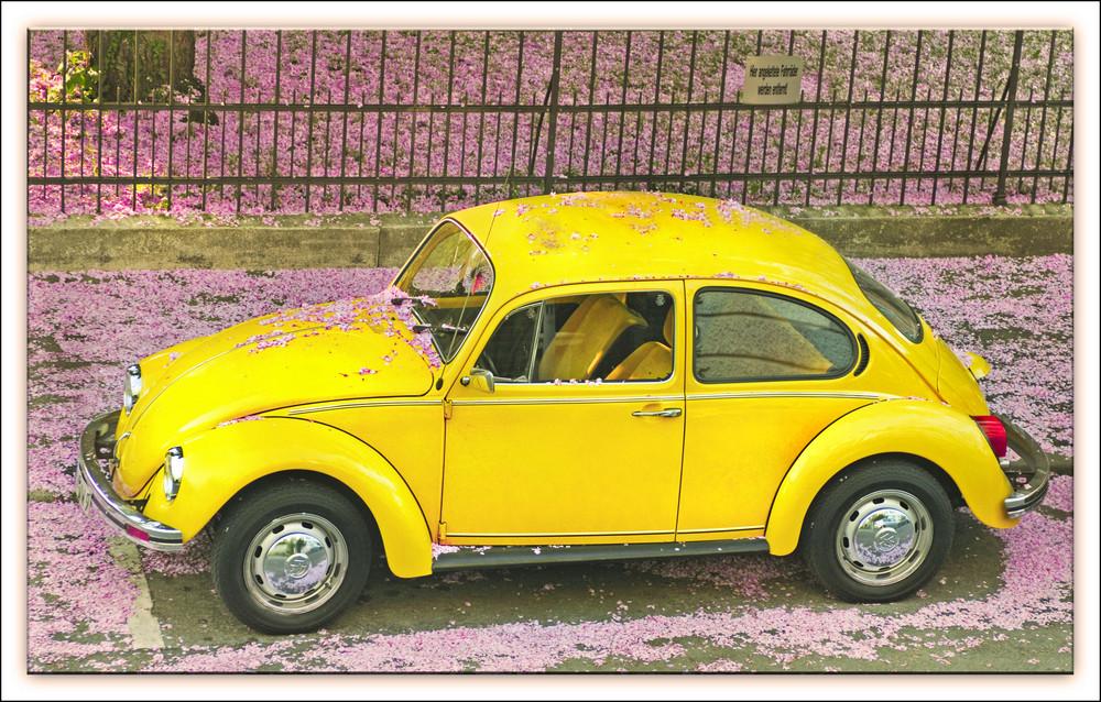Gelber Käfer mit Blüten