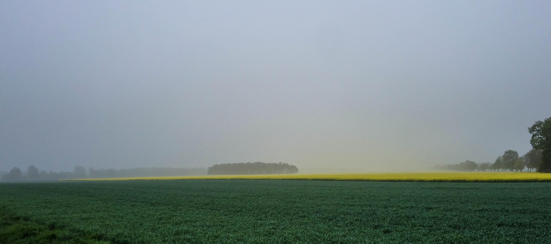 Gelber Nebel