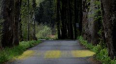 Gelber Zebrastreifen