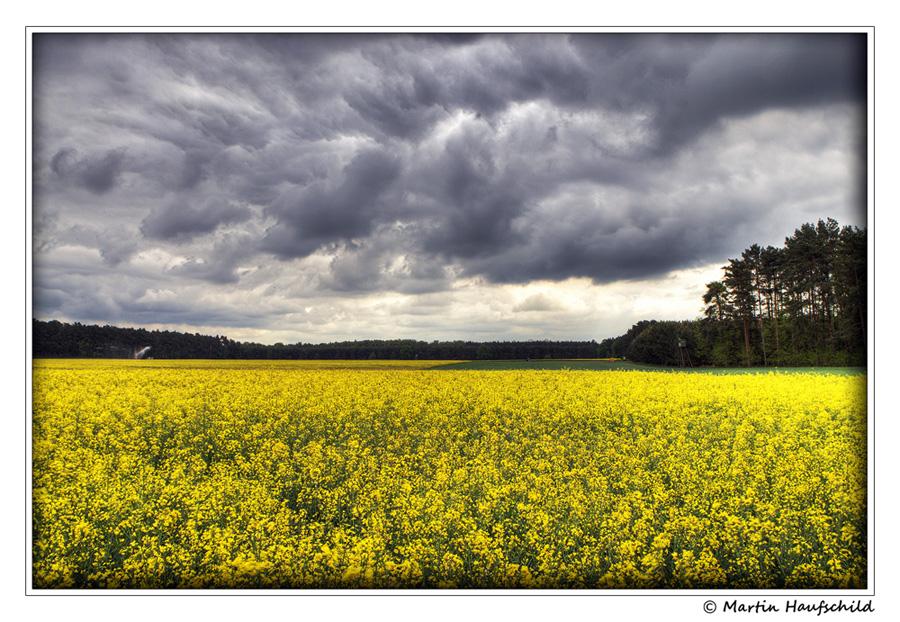 Gelbes Frühjahrswunder
