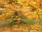 gelbes Herbstfeuer