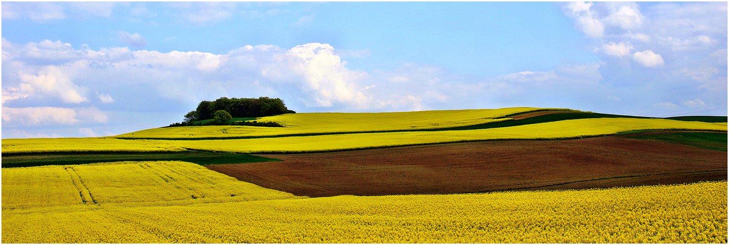"""""""Gelbes Land 1"""""""
