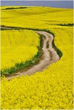 """""""Gelbes Land 2"""""""