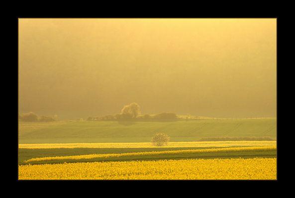 Gelbes Land in raps-gelbem Abend-Dunst... (3. DER REIHE: WAS MAN MIT RAPS...)