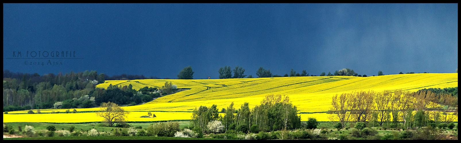 gelb...gelber...Blütenmeer