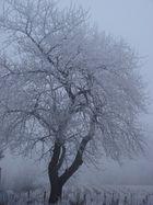 Gelée d'hiver (2)