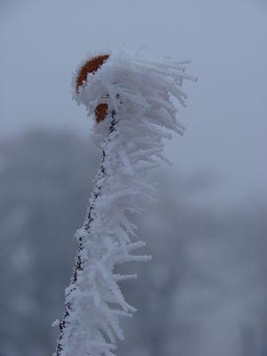 Gelée d'hiver