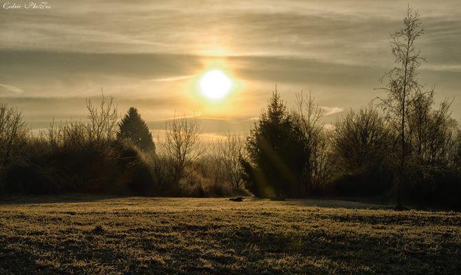 gelée du matin