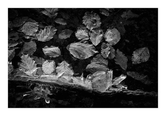 gelidi particolari - 2 (foglie di faggio a pelo d'acqua e formazioni di ghiaccio)