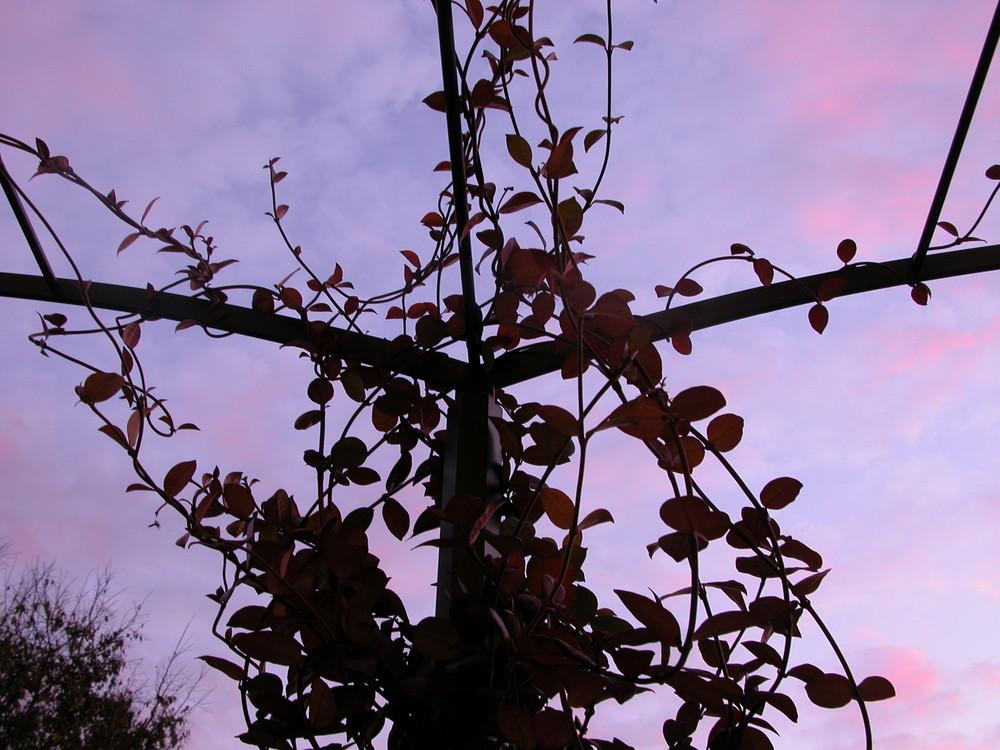 Gelsomino al tramonto