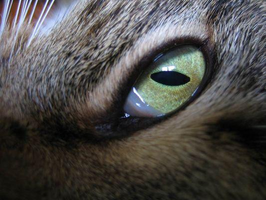 Gelungenes Katzenauge