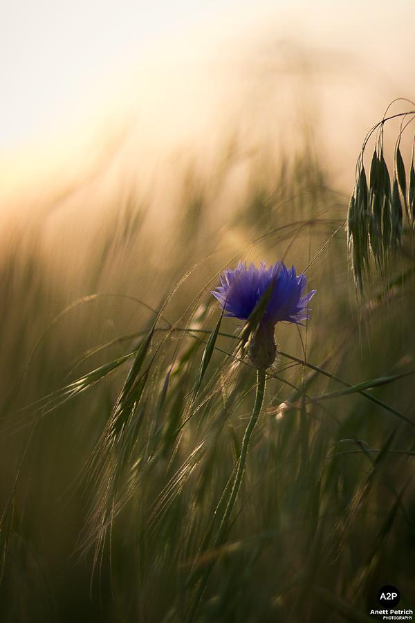 Gemalte Blume