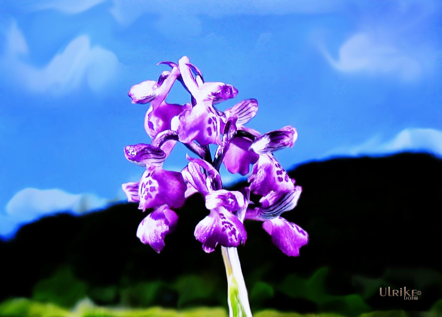 Gemalte Orchidee