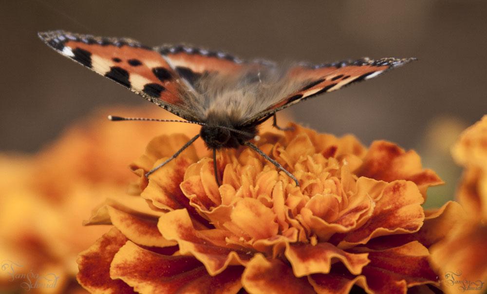 Gemalter Schmetterling