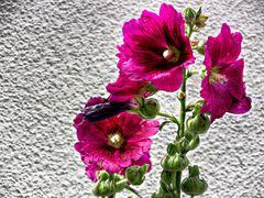 Gemappte Blumen