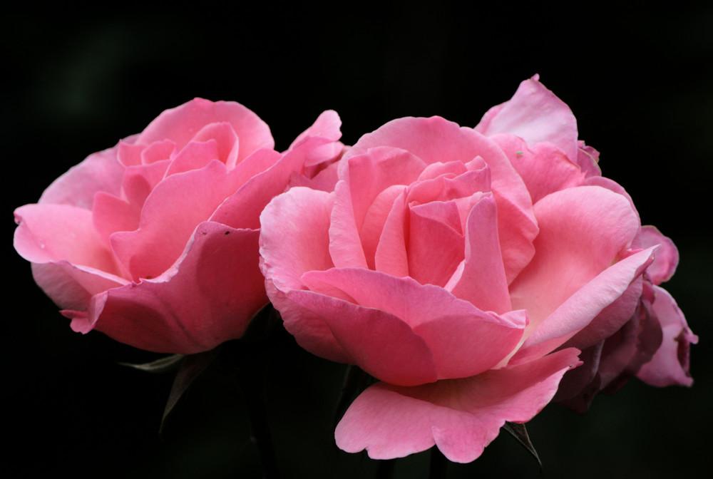 gemelle rosa